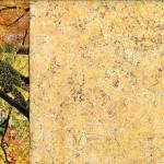 L'érable jaune