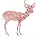 Antilope marbrée, projet